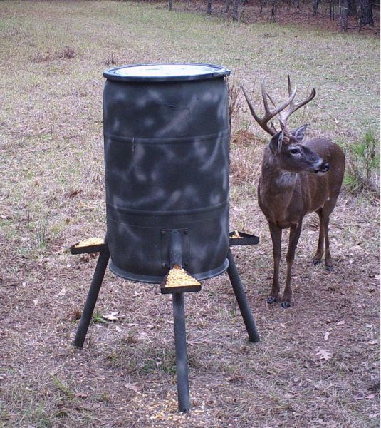 Gain deer insights from feeder trail cameras