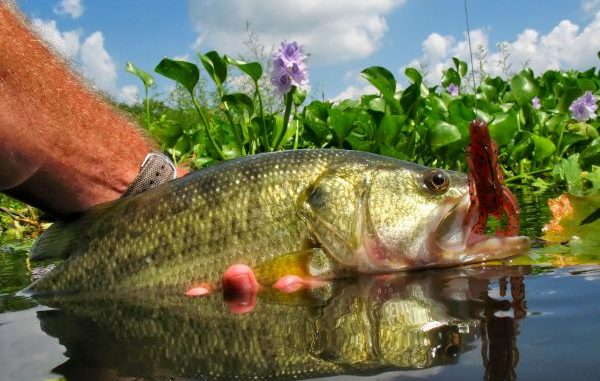 Consistent summertime patterns for Red River bass fishing