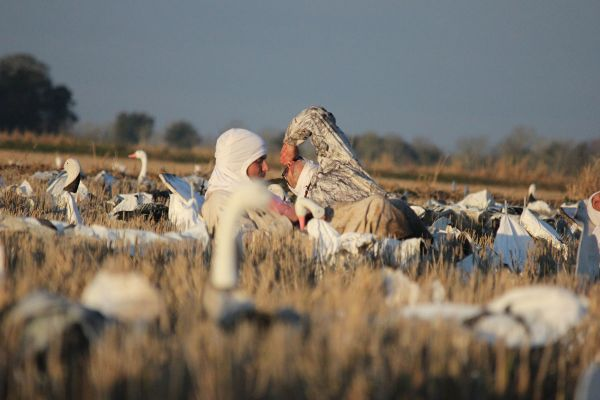 ff421cacafe58 Follow this hunting guide's five steps to cash in on geese with massive rag  spreads.