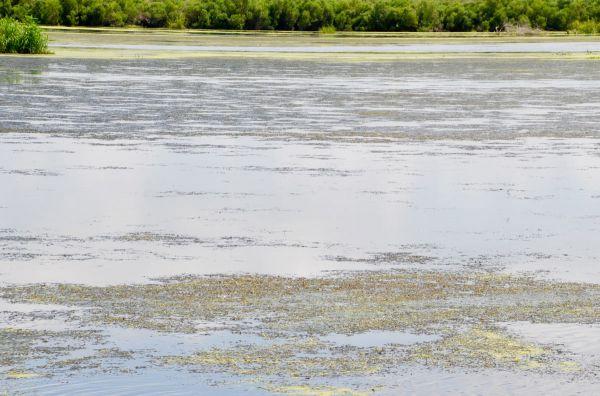 Large mats of dense grass prevent effective boat maneuvering and bait presentation.