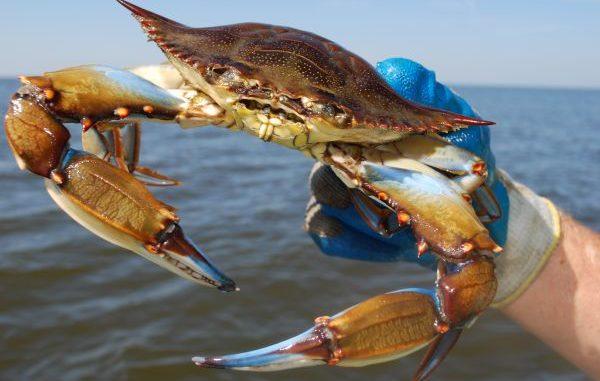Maryland Rv Dealers >> Interesting blue crab trivia