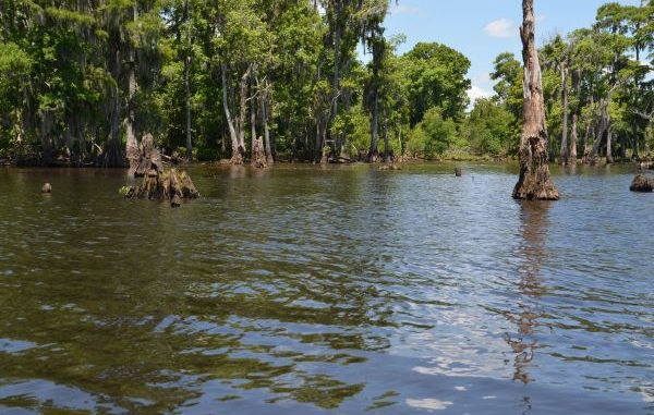 Lake Maurepas is a big, little-known lake that's great for