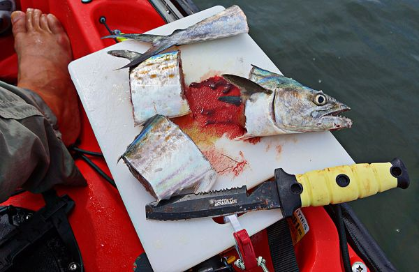 If you want to target sharks from your 'yak, some cut bait will draw in the predators.
