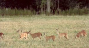 It is unfortunate that many hunters believe there can never be too many deer, when too many deer, especially antlerless deer that hunters don't always shoot, can stress the habitat.