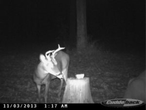 This is very low-end adult buck that should be harvested and is an indication of problems with the deer program.