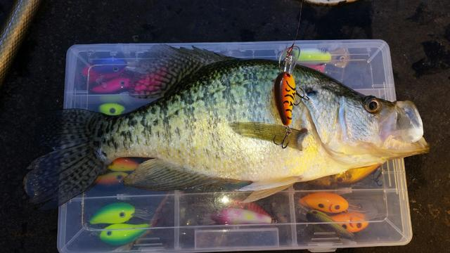 How To Troll Crankbaits For More Crappie