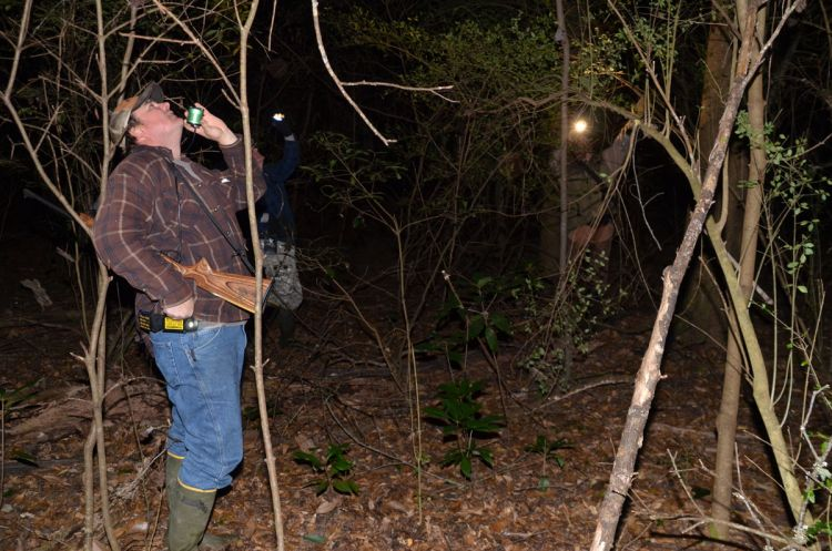 Expert tips for hunting raccoons