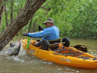 Fighting big catfish at the end of a short line, from a kayak, is an intense experience. Steve Savoye wrestles a big blue cat that was caught on a jugline that was tied off to a willow tree.