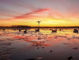 A big spread of mixed decoys is needed early in the season, but less so as dabbling ducks pair off later in the season.