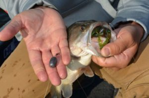 Gleason uses big sinkers, 1-ounce eggs, on his Carolina rigs for deep fishing.