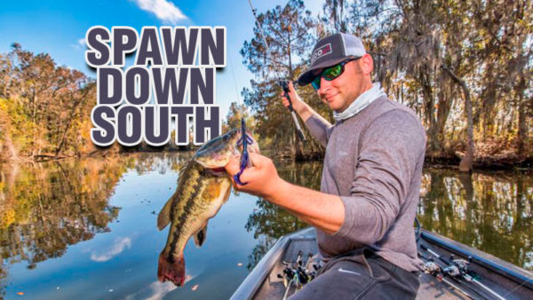 Spawn down south