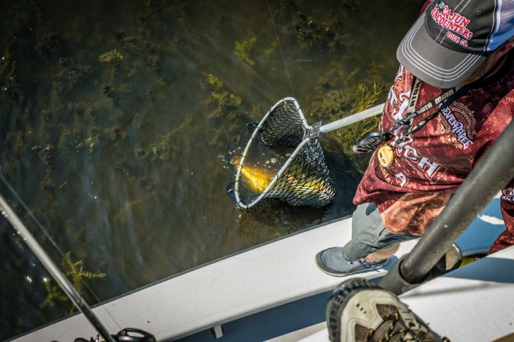 "Jake Leininger scoops up a redfish, and lots of seaweed, too. It's not hard to break off a big red in thick SAV, so quick reaction by the ""net man"" will put more tournament fish in the livewell."