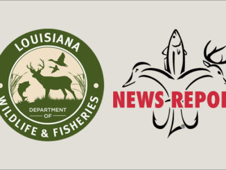 Two Avoyelles Parish men were cited for alleged night-hunting violations after five freshly killed deer were found dumped under a bridge in Plaucheville.