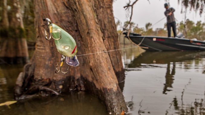 A crankbait bounced off wood cover can be deadly in the canals of the Bayou Black system.