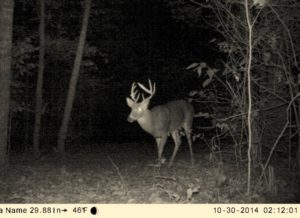The next year, the buck was in better shape — but still wasn't what Simpson was looking for.