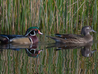 A U.S. magistrate in Alexandria handed out some tough sentences for two Louisiana hunters who pleaded guilty to shooting five wood ducks over an area baited with cracked corn.
