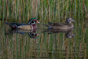 Two hunters who pleaded guilty to shooting five wood ducks over a baited area last season received stiff sentences from a U.S. magistrate in Alexandria this fall.