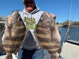 Christian Orfanello and two giant sheepshead he caught on Jan. 6 in the Lakeshore Estate canals in Slidell.