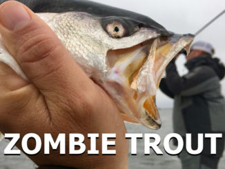 Take what the conditions give you, and potentially score on speckled trout.