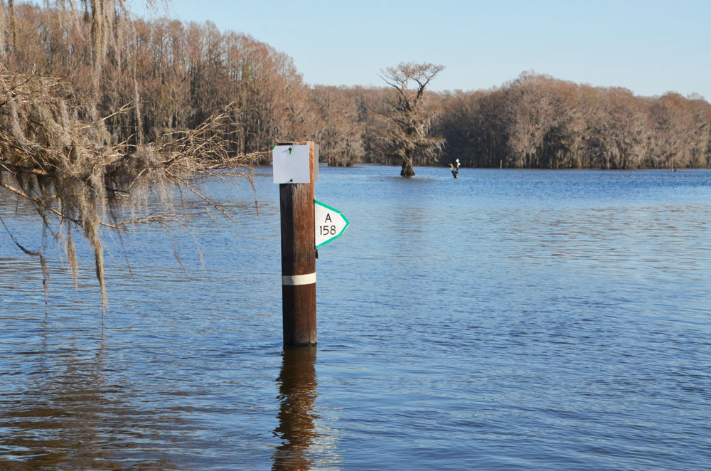 Following marked boat lanes is critical for travel on Caddo Lake. The lane is on the side of the post towards which the metal marker plate is pointed.