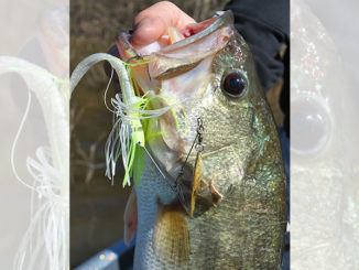 It's tough to beat a spinnerbait when the water is dingy to muddy in the early spring.