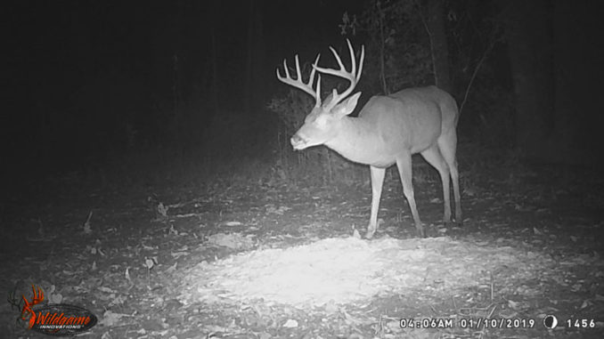 Trophy deer like this 10-point may be the exclusive target of some poachers who are only interested in the biggest and the best.