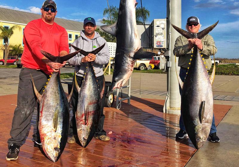 Yellowfin tuna, Venice, LA