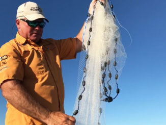 A cast net is a primary tool for fishermen to catch live bait of all kinds.