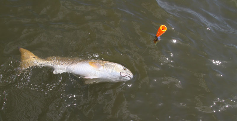 Suspending an artificial shrimp beneath a popping cork is one of the most effective presentations for big redfish.