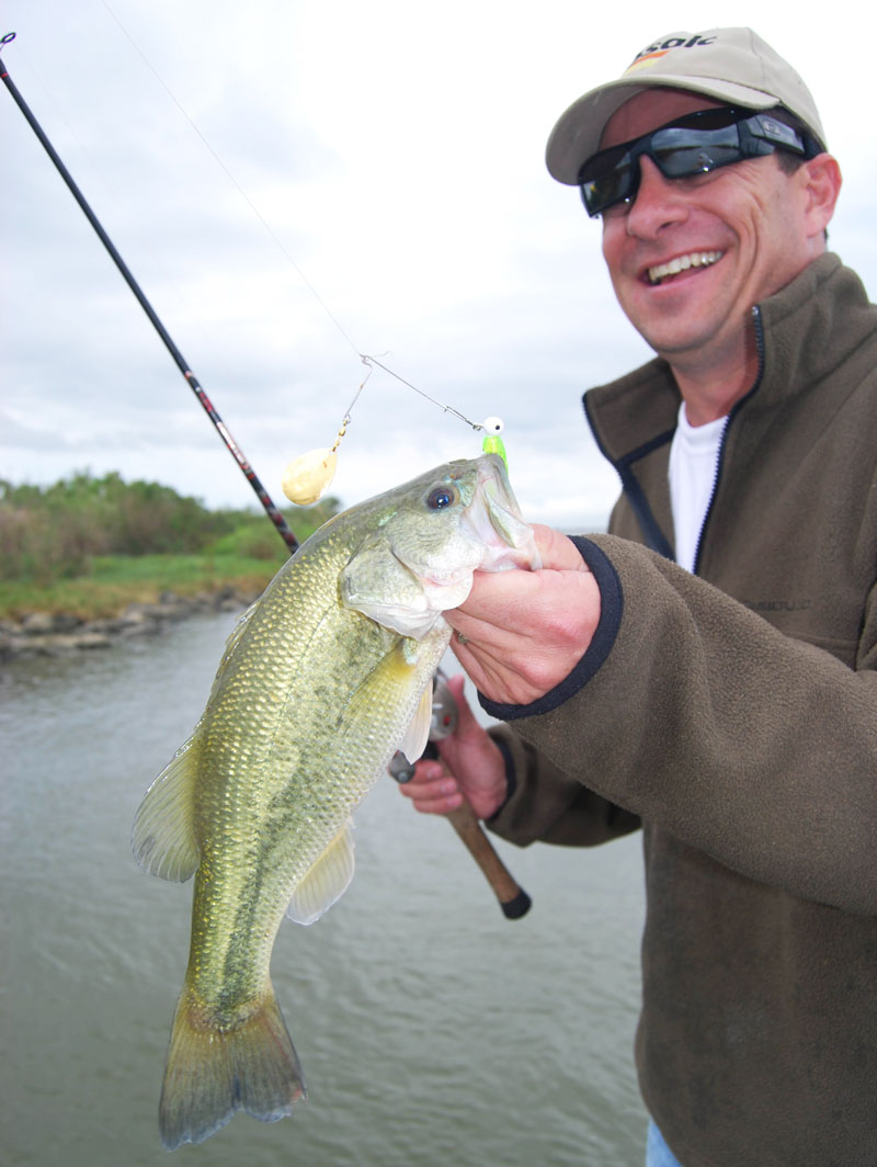 Growth rates in marsh bass did not decrease in salinity as high as 8 ppt.