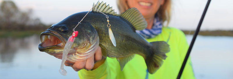 There is a link between lower salinity in the marshes and increased cover in which bass can hide to avoid predation.
