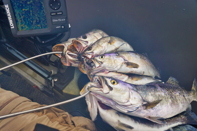 Towing a variety of hard and soft baits behind the kayak is deadly effective for speckled trout.