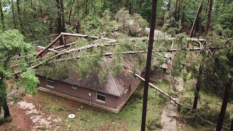 Dozens of trees are down around on on this cabin at Jimmie Davis State Park at Caney Lake. It is one of 12 cabins that suffered structural damage.