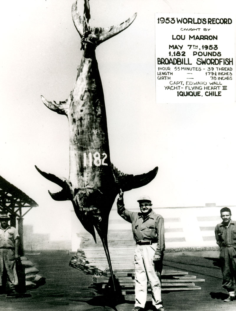Photo courtesy of IGFA