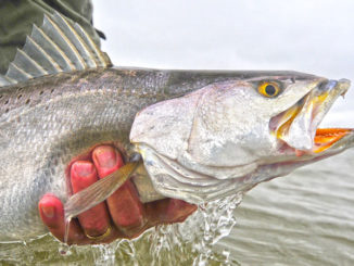 Speckled trout spawn game