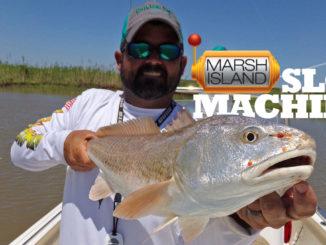Marsh Island slot redfish