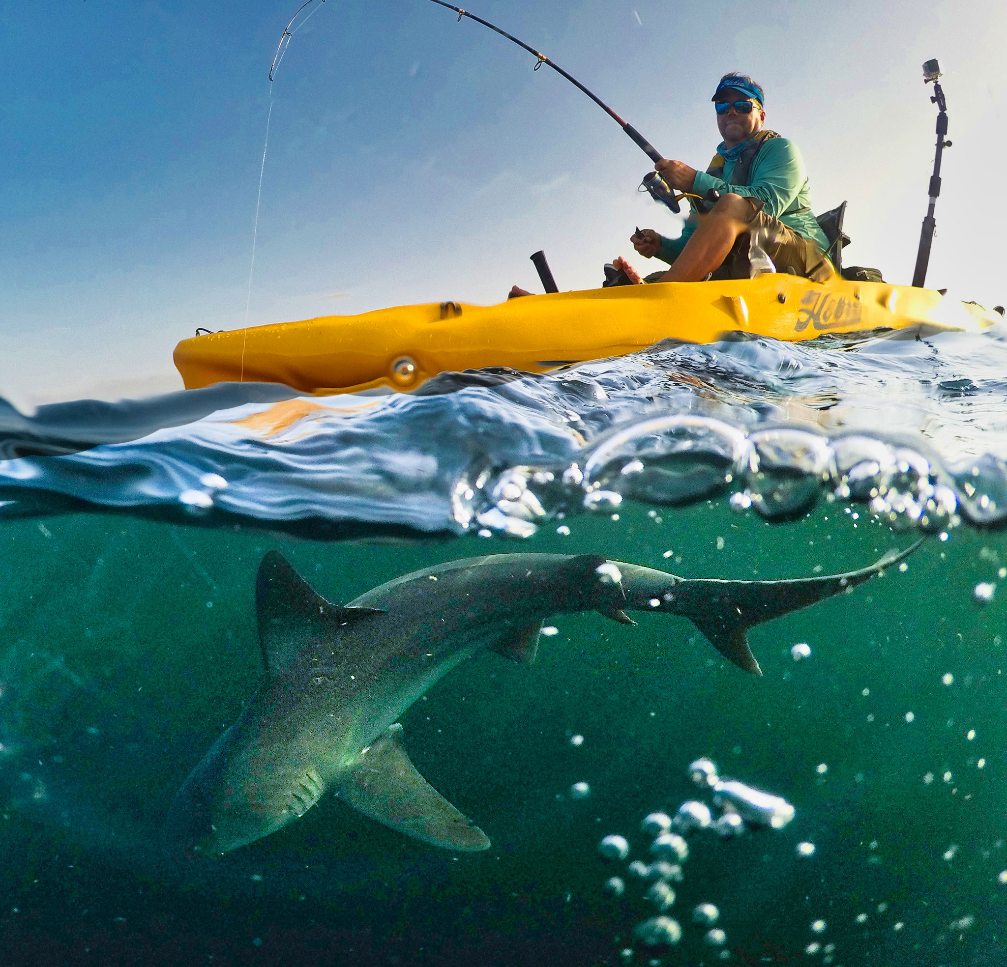 Sharks do not have to be brought on board the kayak and can be exempt from measuring under the program rules. This shark clearly exceeds the 48-inch minimum and will be entry No. 9 for Steve Neece in the BCKFC Master Angler program.