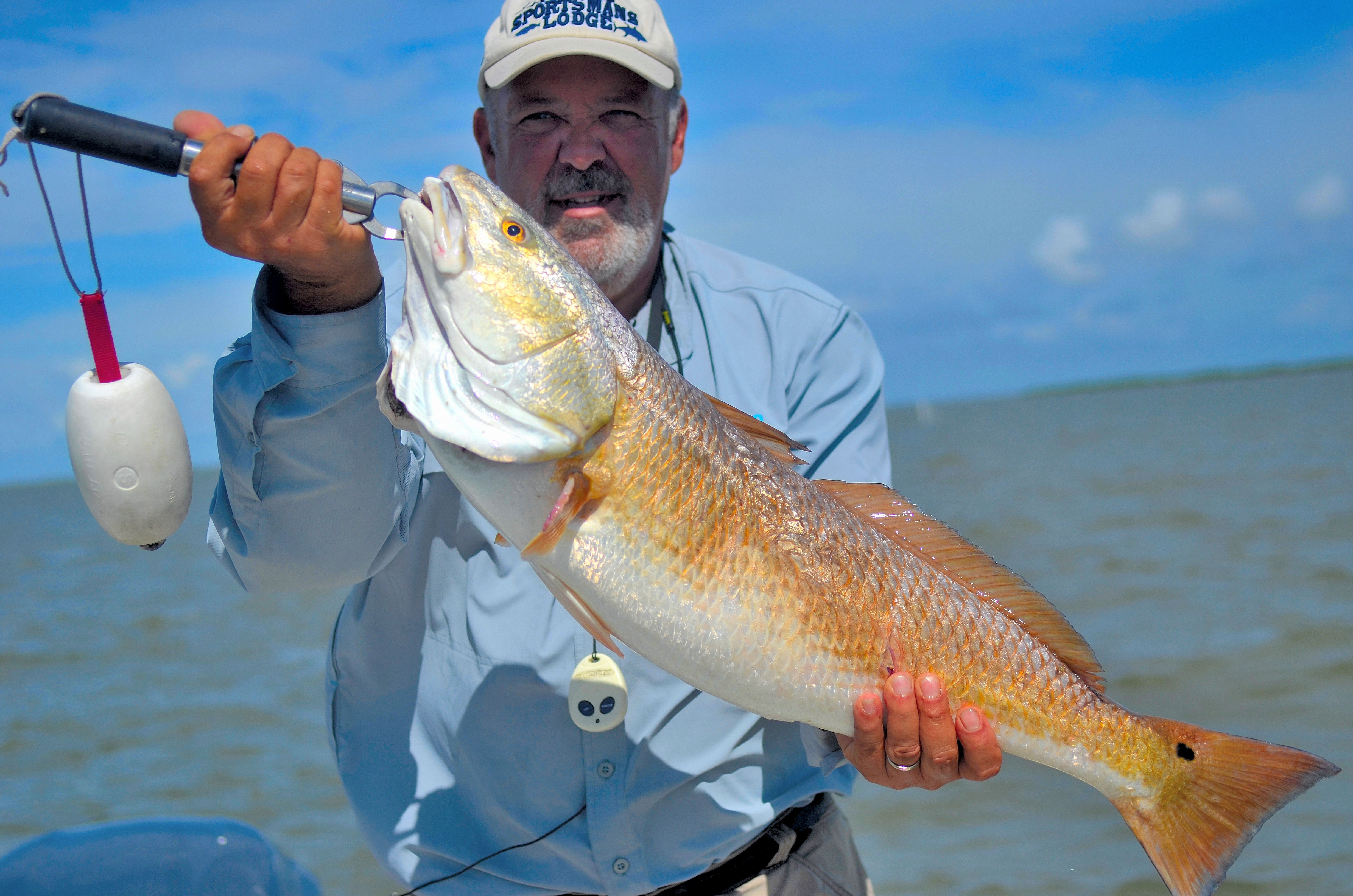 Big bull redfish will be the target for tournament anglers and others during summer's hottest months. Captain Sal Gagliano with Southeast Charters displays a healthy bull red that the coast near Venice is noted for.