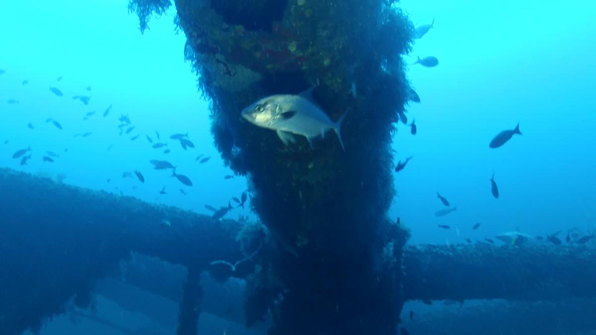 In 1999, the Louisiana Artificial Reef Program created the world's largest artificial reef from the Freeportsulfur mine off Grand Isle. The sulfur mine, with over 1.5 miles of bridgework, is composed of more than 29 structures. (Photo courtesy LDWF)