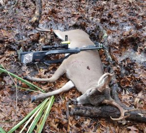 The buck was shot while feeding on large striped Nuttall acorns, which are pictured on the buck's body.
