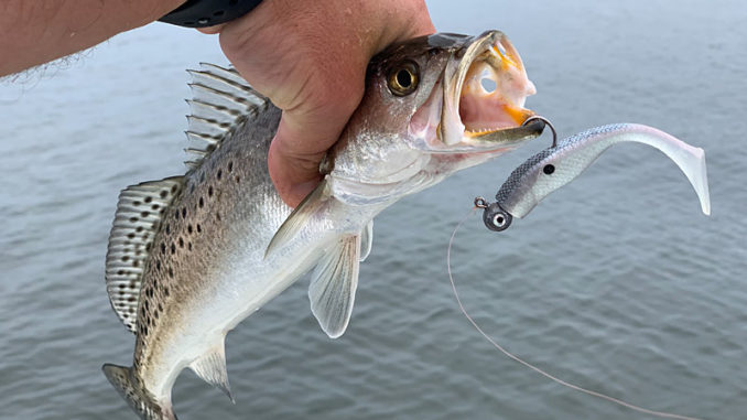 The Matrix X-Shad is Chas Champagne's latest offering. (Photos courtesy Chas Champagne)
