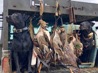 "Duck hunters all have opinions on seasons, zones and splits, but one thing they all agree on is ""we want ducks in the sky and in the decoys"" and that's not always in anyone's control."