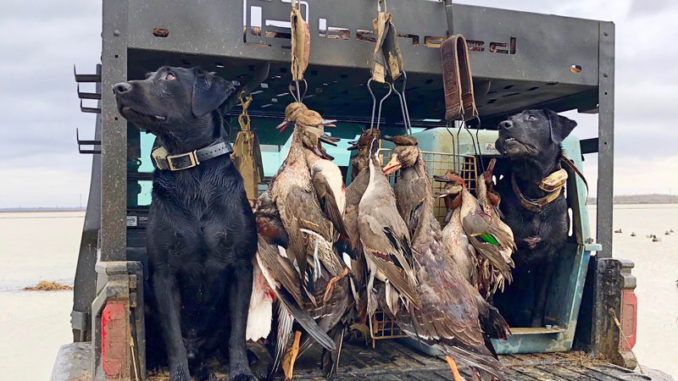"""Duck hunters all have opinions on seasons, zones and splits, but one thing they all agree on is """"we want ducks in the sky and in the decoys"""" and that's not always in anyone's control."""