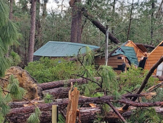 This guest cabin at Sam Houston Jones Park is destroyed, as is the pine forest surrounding it.