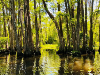 "This photo, ""Peace (Tchefuncte River),"" by Olivia Currier of Covington, placed 1st in the Youth Category."