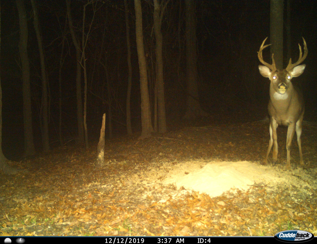 In 2019, the same deer, shown here, was recognizable, but not nearly as large in size or score.