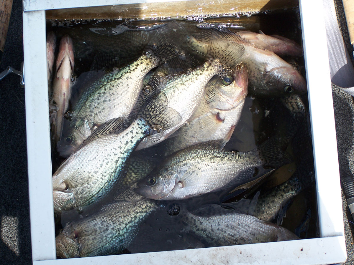 Fish soaking in warm water on a hot summer day in an uninsulated metal livewell will turn great tasting meat into mush. Come prepared by bringing extra ice and bring fish to be kept straight from the water to a cooler full of ice.