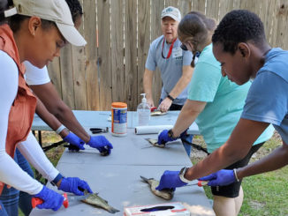 An Aquatic Volunteer Instructor teaches attendees how to clean fish. (Photo courtesy LDWF)